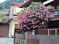 """Cespuglio """"Oleandri"""" - panoramio.jpg"""