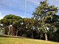 Château de Pibrac - arbres du parc.jpg