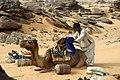Chamelier chargeant un chameau.jpg