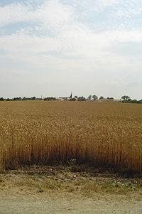 Champs de blé au Fief-Sauvin et son église contemporaine.jpg