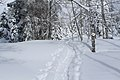 Chemin de randonnée vers la cabane du Carroz - panoramio (21).jpg