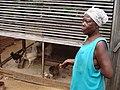 Chicken farmer in Ghana (5926941911).jpg