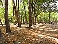 Chitgar Park - panoramio (1).jpg