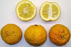 Citrus × aurantium.jpg