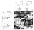 Clusteranalyse.tif