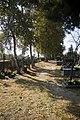 Cmentarz rzymsko-katolicki w Bolimowie przy ul. Skierniewickiej - ścieżka.jpg