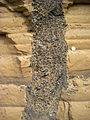 Coarse sand dike Starbuck.JPG