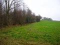 Cock Wood, Peasmarsh - geograph.org.uk - 300435.jpg