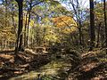 Coldwater River nature trails 2.jpg