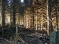 Coleridge Wood - geograph.org.uk - 1095771.jpg