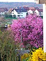 Colours Of Spring - panoramio.jpg
