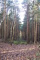 Conifer Plantation in Burnt Bank Wood - geograph.org.uk - 1593441.jpg