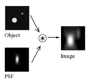 Point spread function - Image formation in a confocal microscope: central longitudinal (XZ) slice. The 3D acquired distribution arises from the convolution of the real light sources with the PSF.