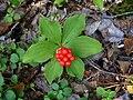 Cornus canadensis 2.jpg