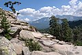 Corse paysage pins laricio Radule.jpg