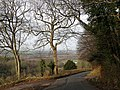 Country Lane near Howle Hill - geograph.org.uk - 1128765.jpg