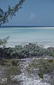 Crinum,Mallatonia Casuarina.Great Harbour Key (27093537109).jpg