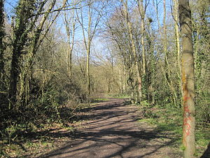 Crofton Wood - Image: Crofton Wood path