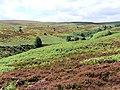 Cross Gill, Barden Moor - geograph.org.uk - 513529.jpg