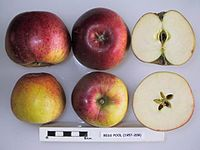 Cross section of Bess Pool, National Fruit Collection (acc. 1957-209).jpg