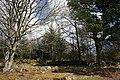 Crow Wood near Robieston - geograph.org.uk - 768686.jpg