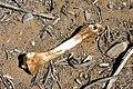 DSC02587 - NAMIBIA 2010 Dumm gelaufen ... (32095974085).jpg
