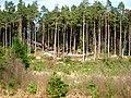 Dalbeattie Forest - geograph.org.uk - 392806.jpg