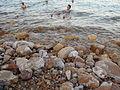 Dead Sea, people swiming.JPG
