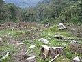 Deforestación alredero del río Medellín.jpg