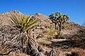 Desert (6561856133).jpg