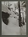 Detail of a snow-covered cliffside with nearby tree (32592420134).jpg
