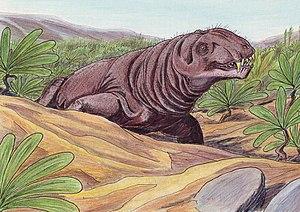 Deuterosaurus - Deuterosaurus biarmicus