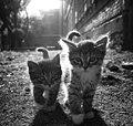 Deux chatons.jpg