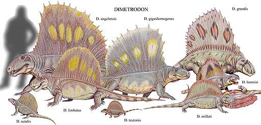 Dimetrodon species2DB15