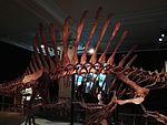 Dinosaurier Berlin naturkunde - 7.jpeg