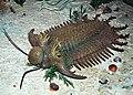 Diorama of a Devonian seafloor - Terataspis trilobite (43824570950).jpg