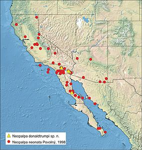 Distribution of Neopalpa species.jpg