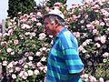 Djura kis rosa clair matin cl.jpg