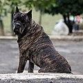 Dog (3274411925).jpg