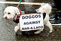 Doggos against Mar-A-Lago (25953014868).jpg