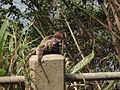 Dois micos no caminho.JPG