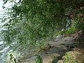 Donau-Nebenarm 21.JPG