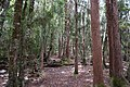 Dove Lake Circuit Walking Track, Cradle Mountain - Lake St Clair National Park 65.jpg