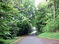 Drive through Wendover Woods - geograph.org.uk - 170053.jpg