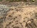 Dunes Charmes Sermoyer 40.jpg