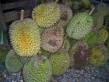 Durio zibethinus fruit, sold at roadside marke...