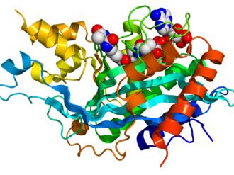 P300-CBP coactivator family - Image: EP300 3BIY
