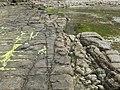 Eaglehawk Neck tessellated pavement 20201115-022.jpg