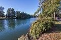 Earlwood NSW 2206, Australia - panoramio (4).jpg
