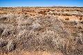 East of Three Mile Hills - Flickr - aspidoscelis (2).jpg